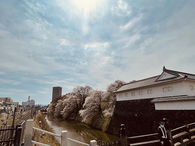 山形霞城公園大手門 満開の桜(投稿者:遠藤みどり)