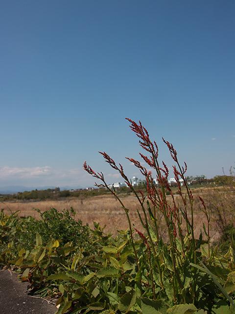 多摩川の土手(投稿者:ブン太)