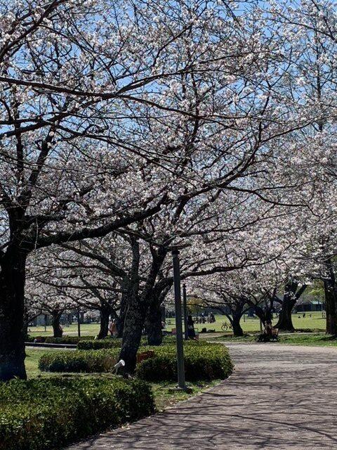 公園(投稿者:ひかり)