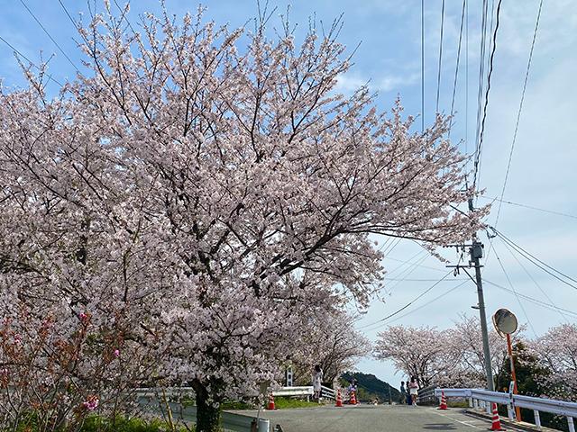 福岡県新宮町(投稿者:saki)