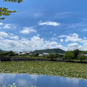 福知山市砂子池(投稿者:t.yoshimi )