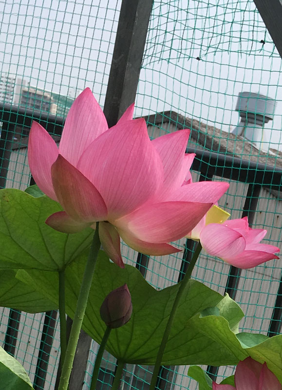 江戸川屋上庭園
